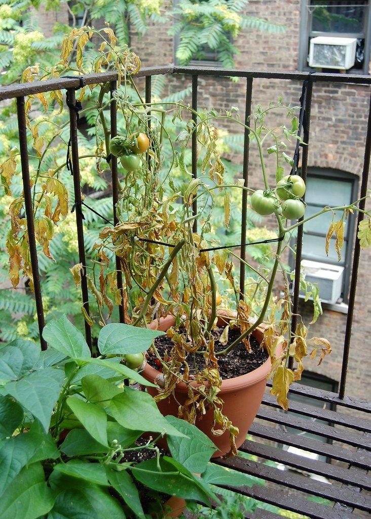 green house balcony
